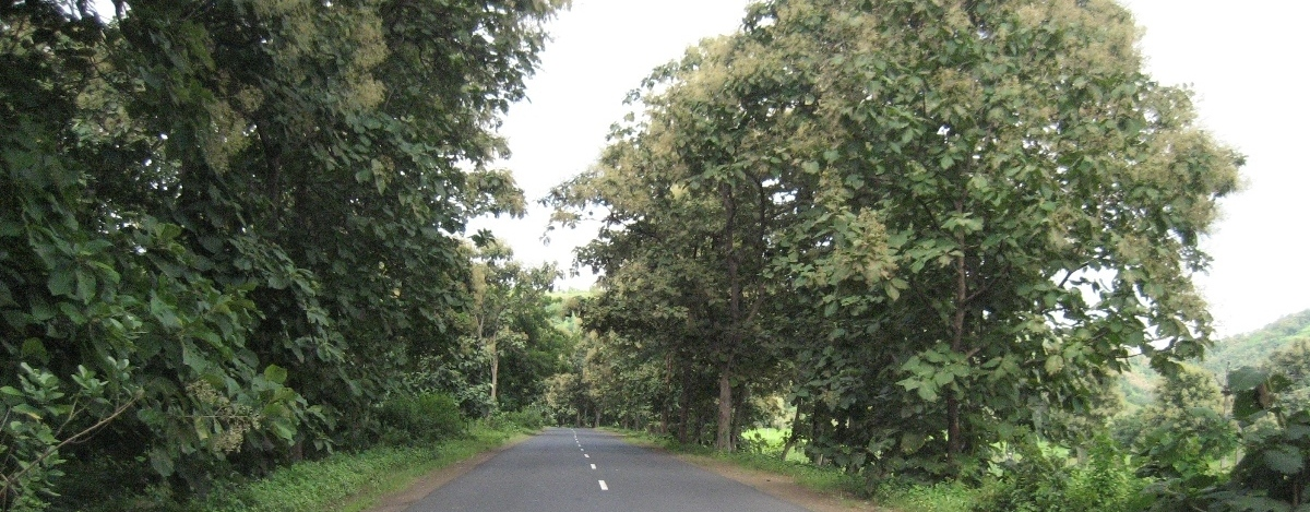 Betul - Paratwara Road1
